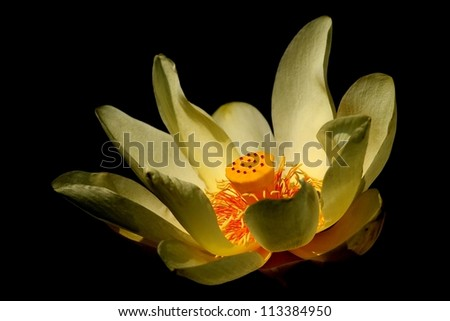 In search of space.... A Water Lily that seems to be floating in space. - stock photo
