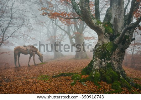 In the autumn misty forest trees grazing horse. Fog in the fairy forest.
