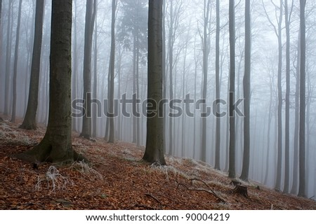 In the beech forest with freezing fog in the background - stock photo