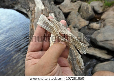 In the beginning of summer the snake changes old leather. - stock photo