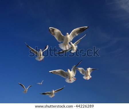 In the blue sky hovering gulls, like the angels - stock photo