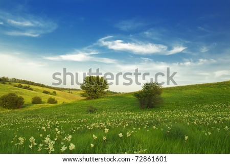 in the evening in flowerings meadows - stock photo