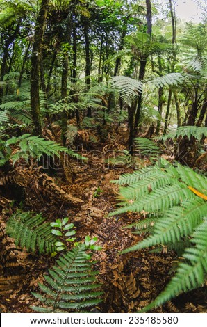 In the fern forests of the New Zealand - stock photo