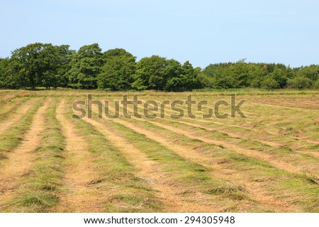 In the middle  of a mown hayfield on a hot summer day - stock photo