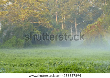 In the morning with mist and, sunshine. - stock photo