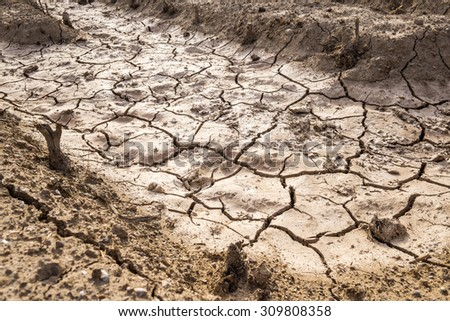 In the picture we can see the effects of drought in an orchard, the earth cracks and everything is dry