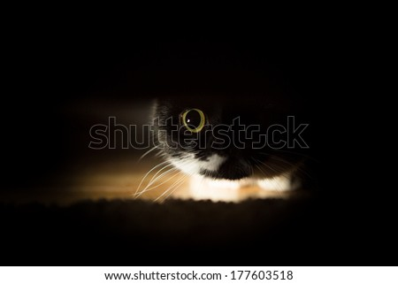 In the shadow - stock photo