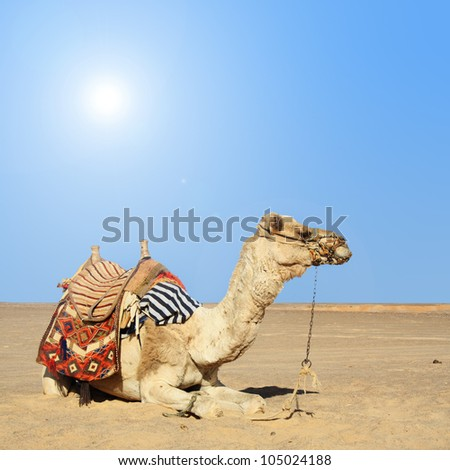 in the summer holiday on a camel ride - stock photo