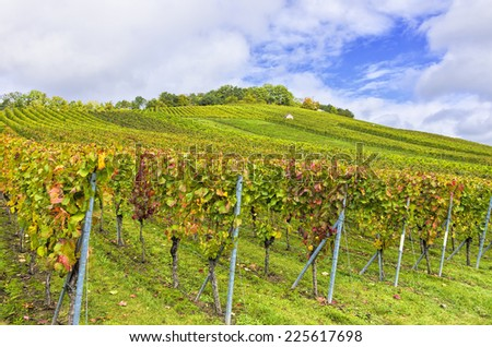 In the Vineyard in Fall - Vineyard in autumn near Heilbronn, Germany. - stock photo