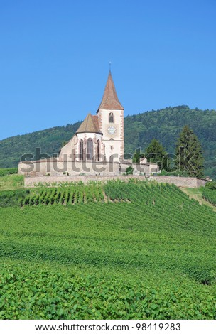 in the Vineyard of Hunawihr in Alsace near Colmar,France