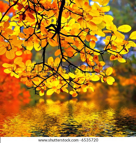 In this photo the beautiful autumn wood is shown - stock photo