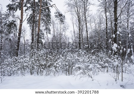 In winter, heavy snow fell in the park
