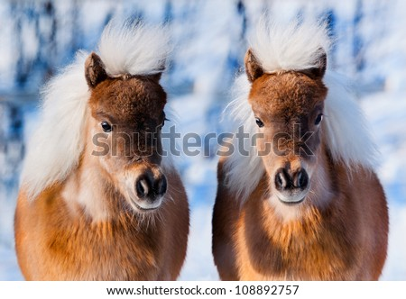 Awesome Cute Pony Stock Images Royalty Free Images Vectors Shutterstock Hairstyles For Men Maxibearus