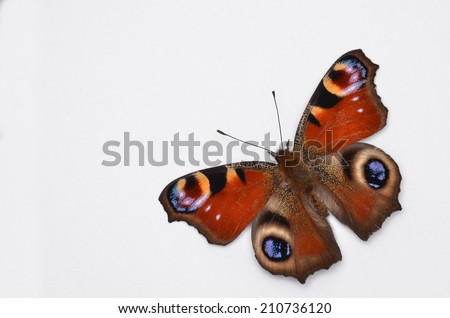 Inachis Io, Peacock butterfly on white background - stock photo