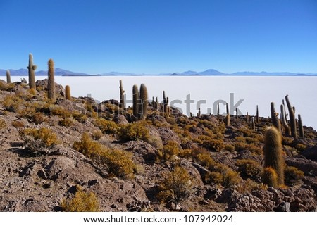 Incahuasi island in the salar de uyuni with cactus