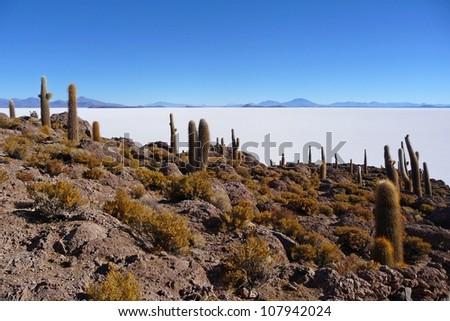 Incahuasi island in the salar de uyuni with cactus - stock photo