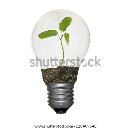 Incandescent light bulb with a plant as the filament - stock photo