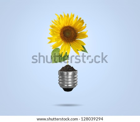 Incandescent light bulb with sunflower as the filament - stock photo