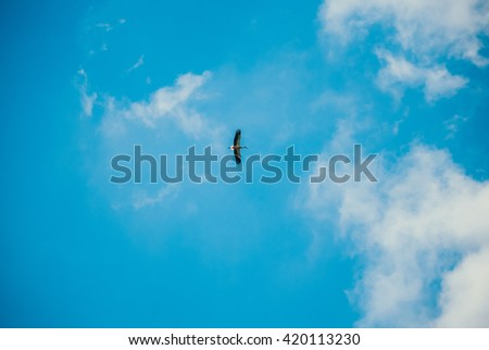 Independent free stork floating high in the clouds - stock photo