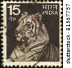 INDIA - CIRCA 1974: A stamp printed in India shows tiger, circa 1974 - stock photo