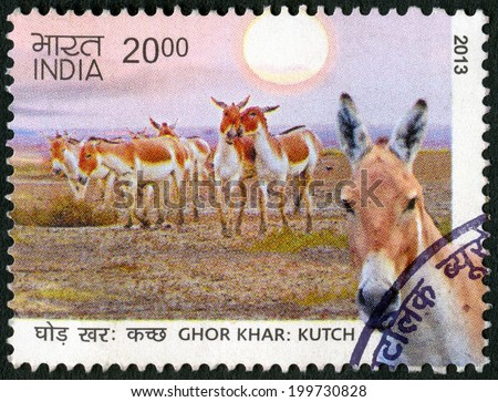 INDIA - CIRCA 2013: A stamp printed in India shows Wild Ass of Kutch, circa 2013 - stock photo