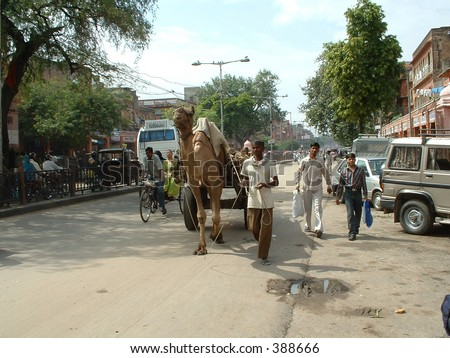 India, Jaipur: Camel carrying heavy load in the street
