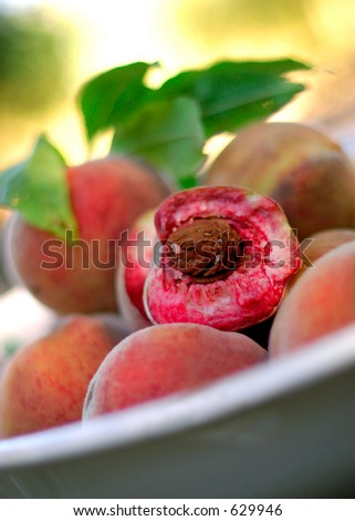 Indian Blood peaches also known as White Peach in a bowl outdoors.