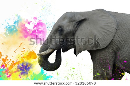 Indian Elephant during The Holi - Festival of Colours - stock photo