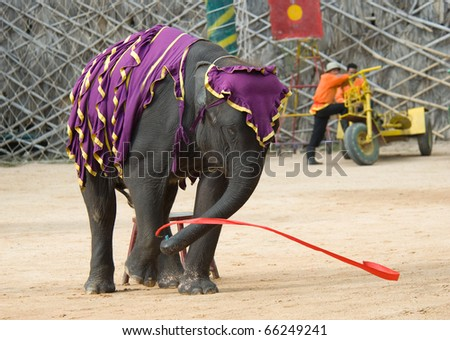 Indian elephant playing with red type