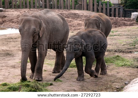 Indian Elephant with Baby Calf - stock photo