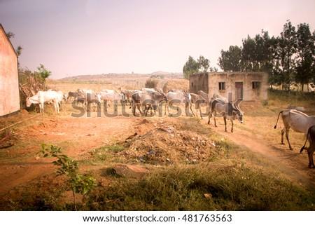 Dairy farm project report andhra pradesh