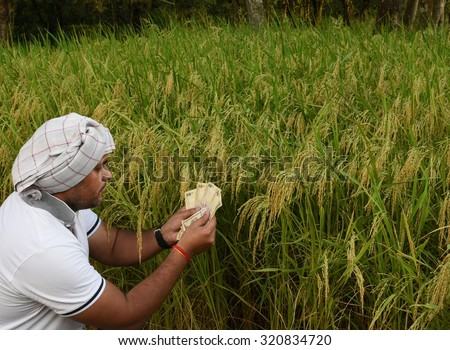 Indian Farmer counting money in front of lush green rice paddy farm, concept of making money in Agriculture - stock photo