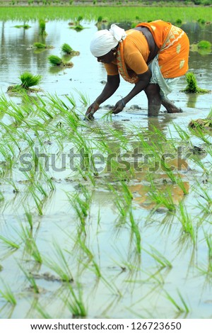 Indian farmer working on Field - stock photo