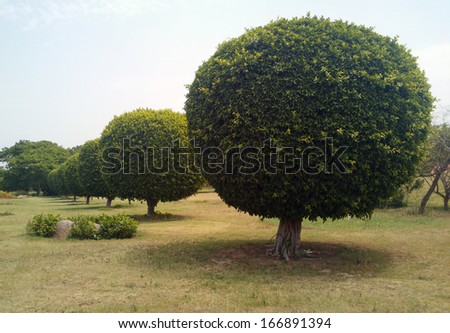 indian garden in summer - stock photo