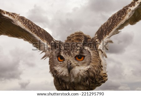 Indian or Bengal Eagle owl - stock photo