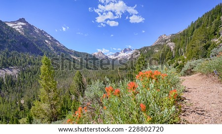 Indian Paintbrush, Sawtooth National Recreation Area, near Stanley, Idaho Legend has it that the sunset was created using colors found in the leaves of the Indian Paintbrush. - stock photo