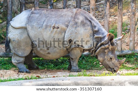Indian rhinoceros - stock photo