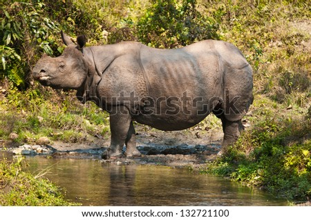 ... .com/pictures/l/1203614995/prehistoric-single-horned-wooly-rhino.jpg