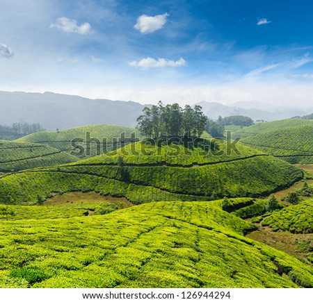 Indian tea concept background - tea plantations. Munnar, Kerala, India - stock photo