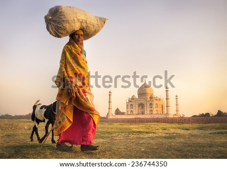 Indian woman carrying on head and goats near the taj mahal.  - stock photo