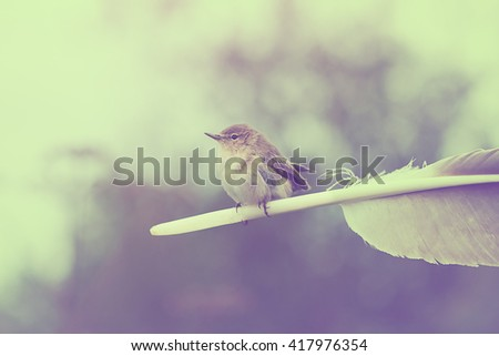 indie concept - Warbler sits on eagle feather, retro vintage stele color toned image - stock photo
