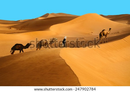Indigenous berber man with dromedary camels travelling in Sahara desert - stock photo