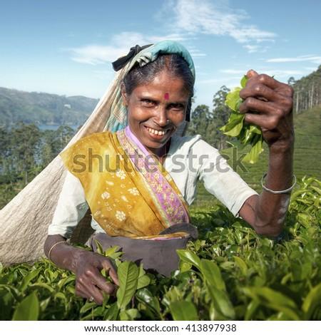 Indigenous Sri Lankan Tea Picker Character Concept - stock photo