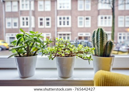 Indoor cactuses and plants in white plant pots placed in front a white window frame in a bright, modern apartment