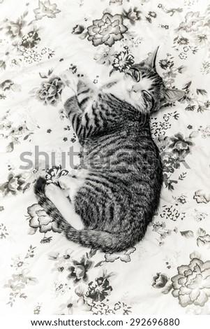 indoor cat - stock photo
