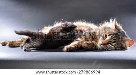indoor family group portrait of kittens with mother cat - stock photo