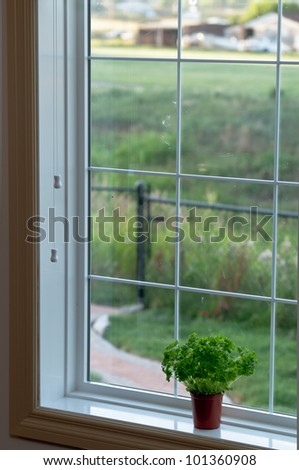 Indoor herbs garden - stock photo