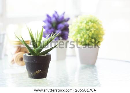 Indoor plant in a bathroom window - stock photo