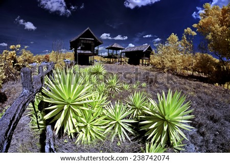 infrared image of abandon building and thorny plant - stock photo
