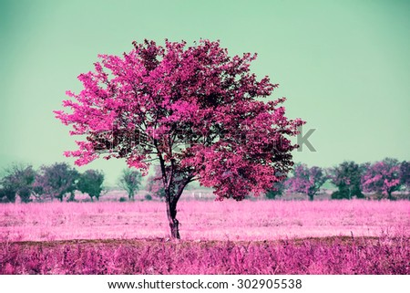 infrared landscape with alone tree in the field  - stock photo